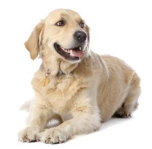 Hunden Olsen