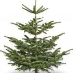 Juletræet bliver pyntet for anden gang
